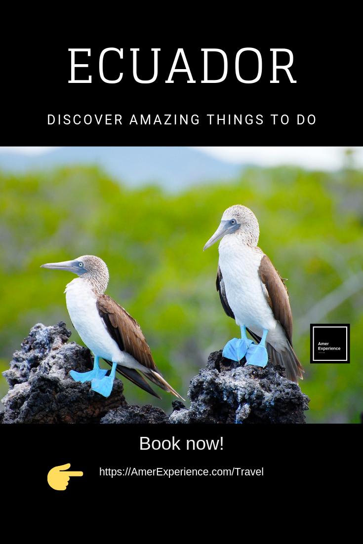 Galapagos famous Pata Azul water birds